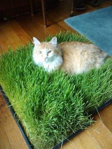 лежак для кошек - трава