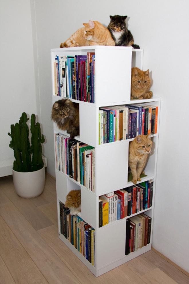 домики для котов на книжных полках