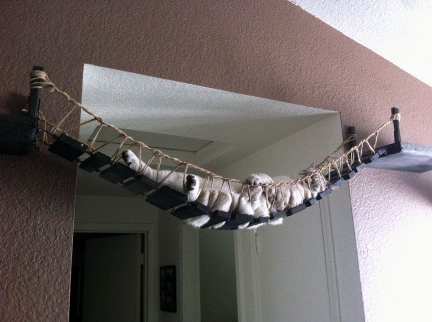 мостик Индианы Джонс - лежак для кота