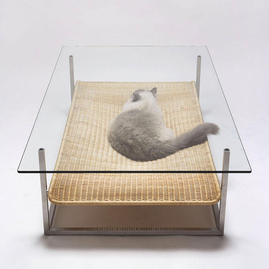 кот под журнальным столиком
