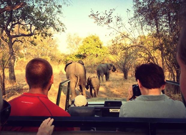сафари: вид из едущего джипа на слонов перед машиной