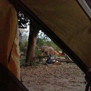 сафари: вид из палатки на пасущихся рядом слонов