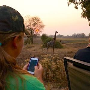 сафари: девушка фотографирует жирафа