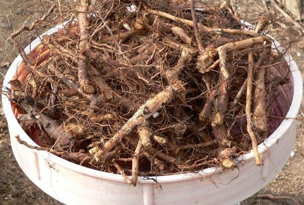 Как правильно собирать травы для приготовления травяных сборов и фиточаев