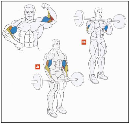 помогут вам набрать такую форму, что в спортивном зале у вас уже даже не будет необходимости начинать с «0»-го уровня