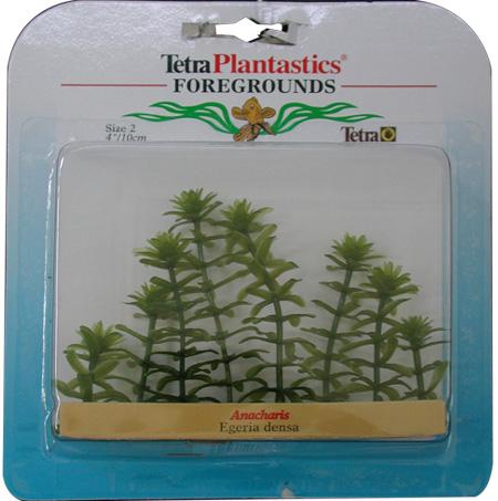 Пример водорослей для деревьев
