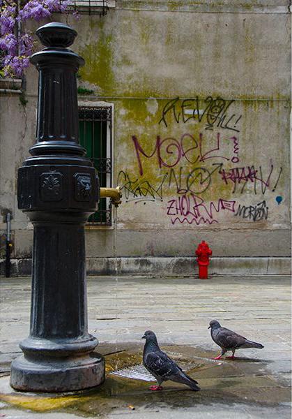 пожарный гидрант, голуби, вода, граффити