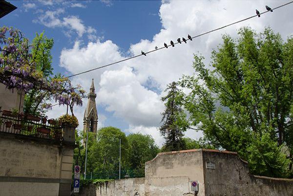 направляющие линии в фотографии птицы на проводе