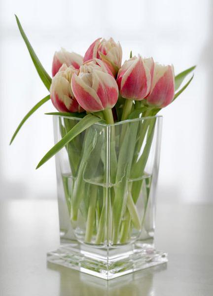 Тюльпаны – синоним ранней весны