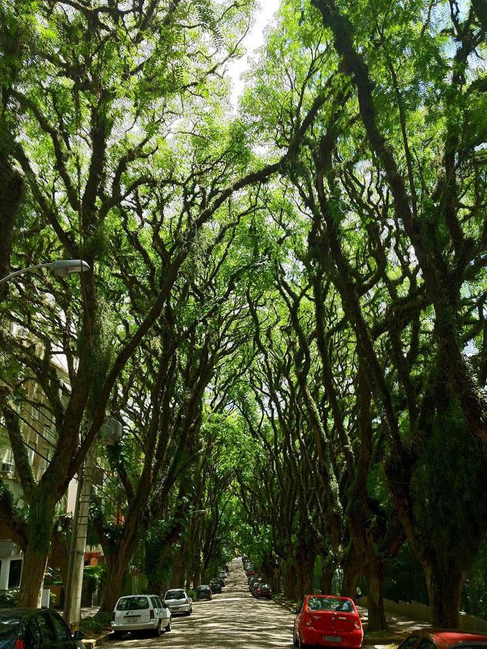 Порту-Алегри – Бразилия: улицы под сенью деревьев