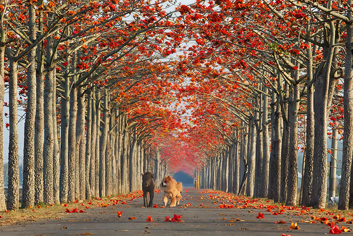 Тайвань осенью: улицы под сенью деревьев