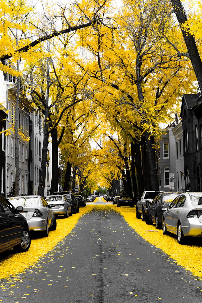 Округ Вашингтон - США: улицы под сенью деревьев
