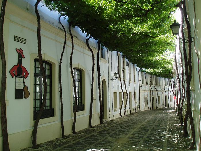 Херес - Испания: улицы под сенью деревьев