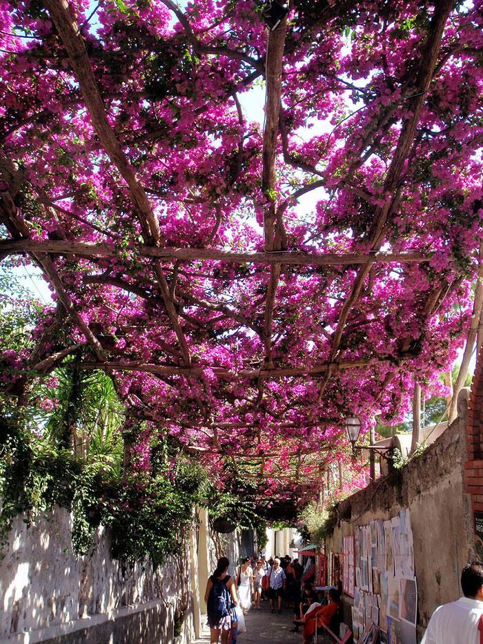 Позитано - Италия: улицы под пологом цветов