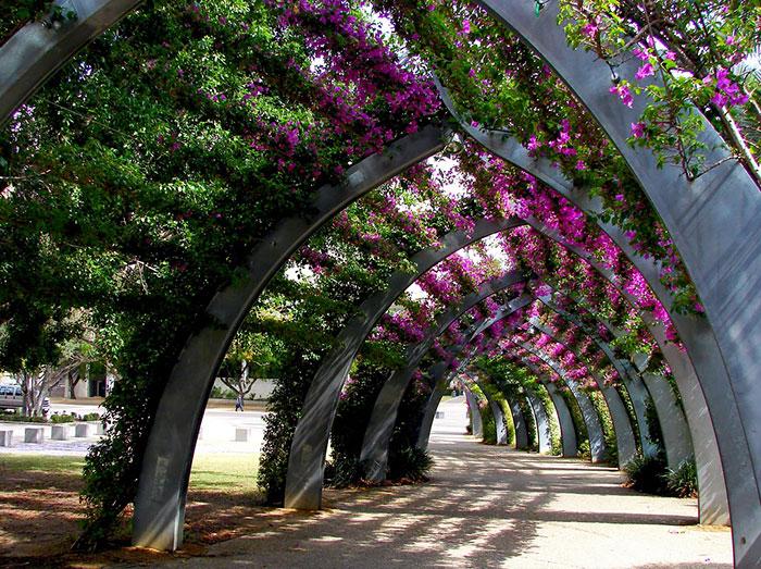 Брисбен – Австралия: улицы под пологом цветов