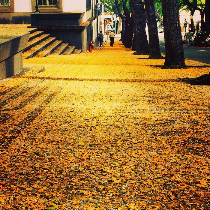 Фуншал - Остров Мадейра, Португалия: улицы под сенью деревьев