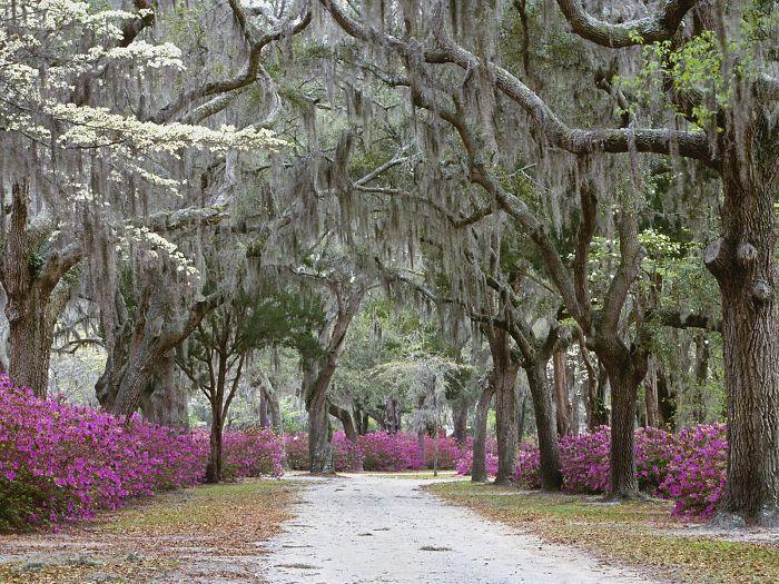 Саванна, Джорджия – США: улицы под сенью деревьев