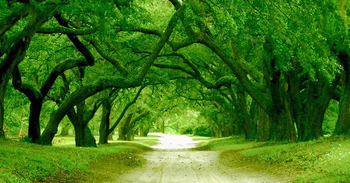Ортон Плантейшен, городок Смитвилль в графстве Брансуик, Северная Каролина - США: улицы под сенью деревьев