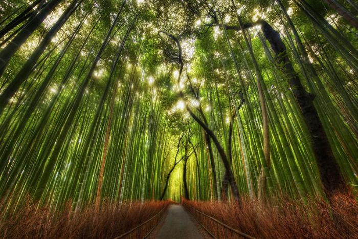 Бамбуковый лес - Сагано, Япония: улицы под сенью деревьев