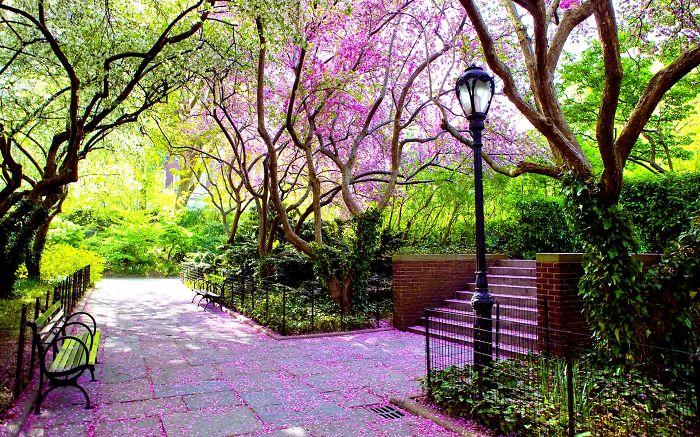 улицы под пологом цветов и деревьев