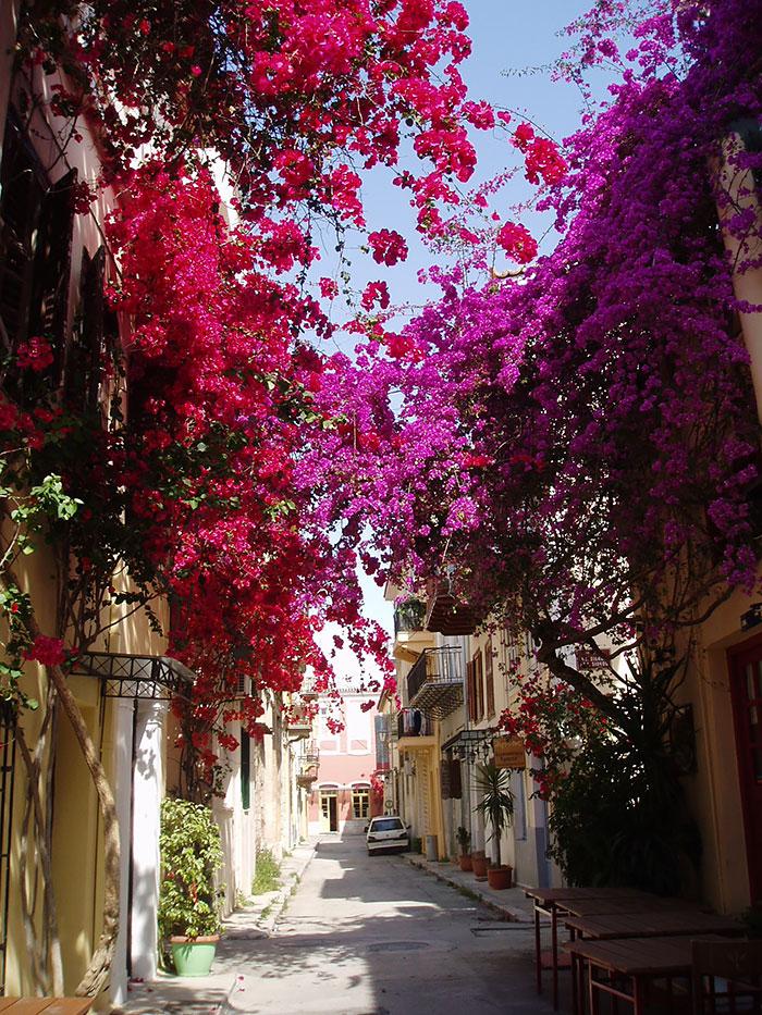Греция: Нафплион: улицы под пологом цветов