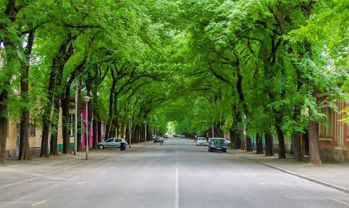Кикинда - Сербия: улицы под пологом деревьев