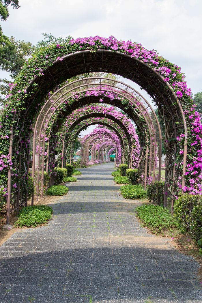 Туннель цветочных арок в Сингапуре: улицы под пологом цветов