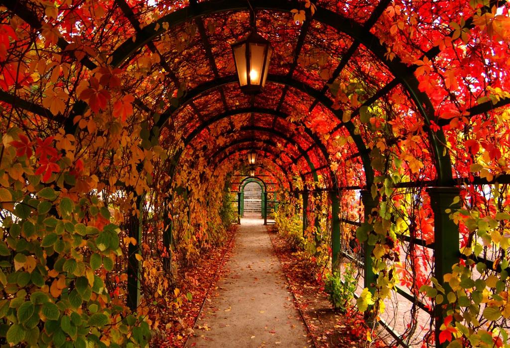Тоннель из деревьев (арочная аллея Верхнего парка) в Петергофе -  Санкт-Петербург, Россия, осенью