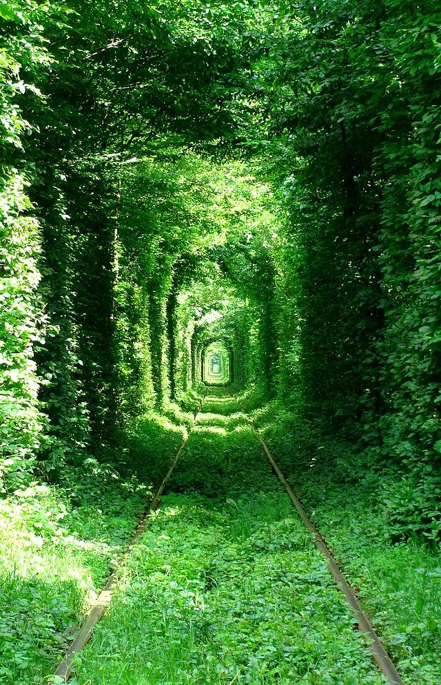 Туннель любви на Украине около Клевани: улицы под пологом деревьев
