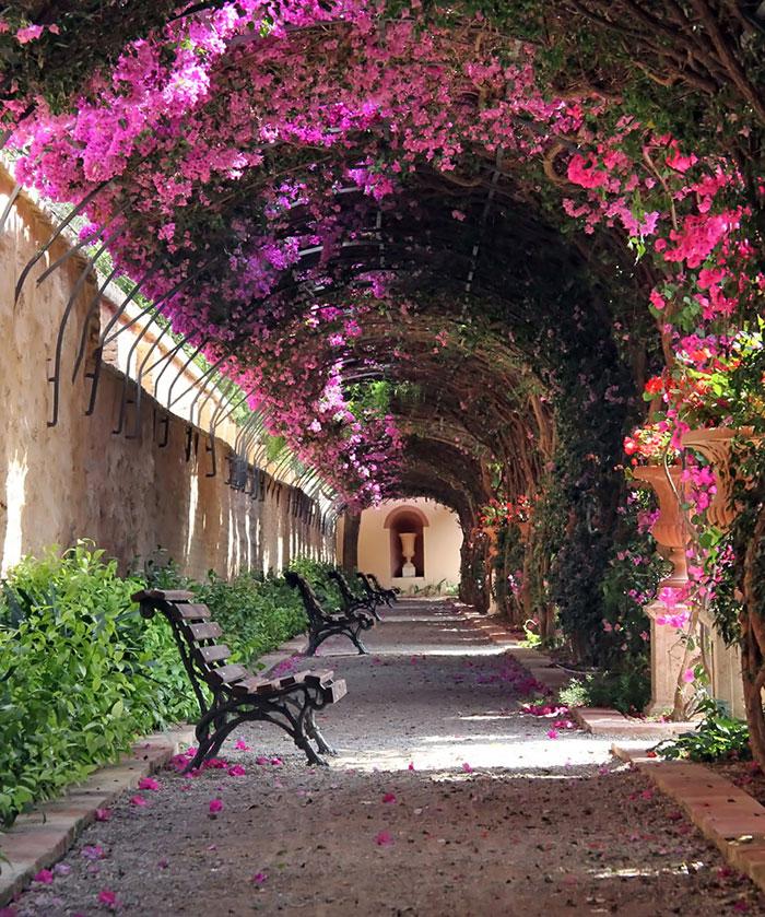Валенсия, Испания. Улицы под пологом цветов.