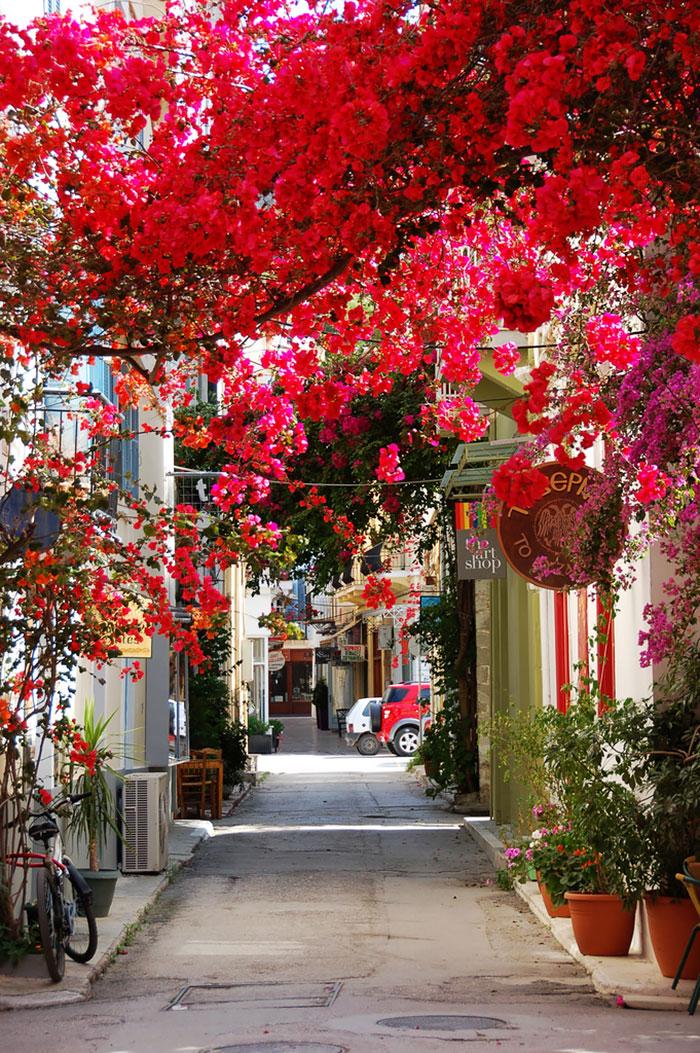 Греция: Нафплио, Пелопоннес: улицы под пологом цветов