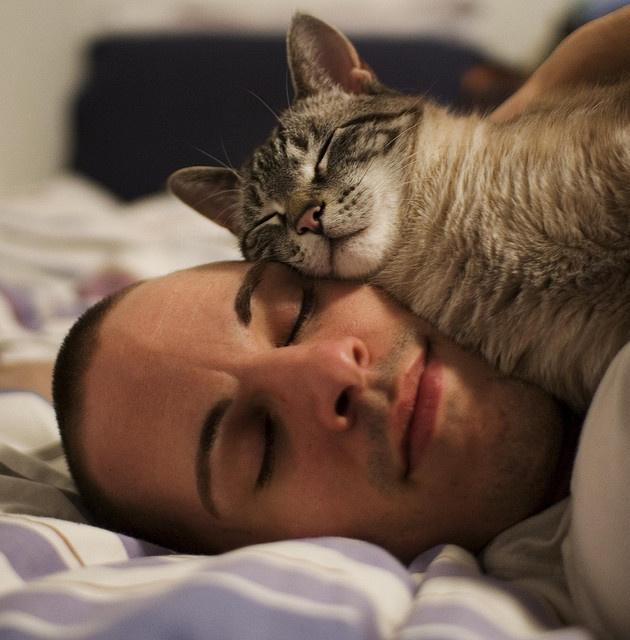Не ложитесь спать в гневе: парено спит с котом