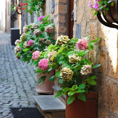 Орвието Италия удивительные уютные и волшебные улочки города цветы в горшках на улицах дороге