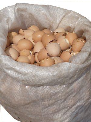 яичная скорлупа для огорода