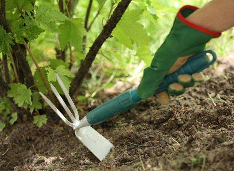 пропалывайте землю вокруг растений и клумб