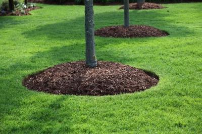 деревянная щепа вокруг деревьев