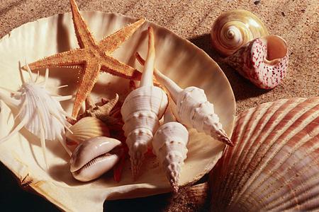 Тщательно промойте все раковины, чтобы убрать с них частицы грязи, соли, песка