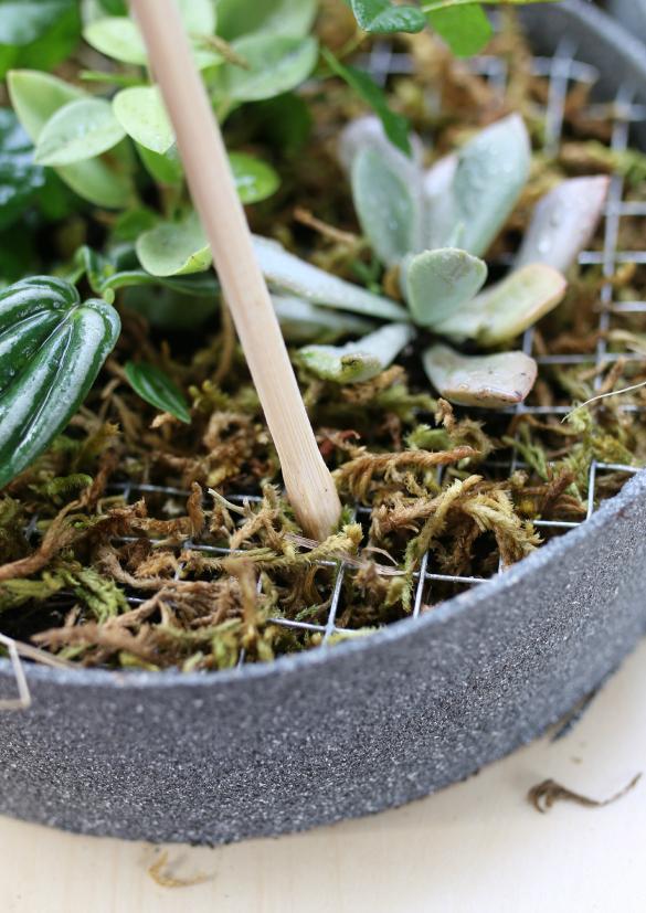 Под конец – после высадки всех растений – добавляем сверху слой цветочного мха: он закроет сетку, со временем укрепит всю конструкцию, чтобы земля не высыпалась
