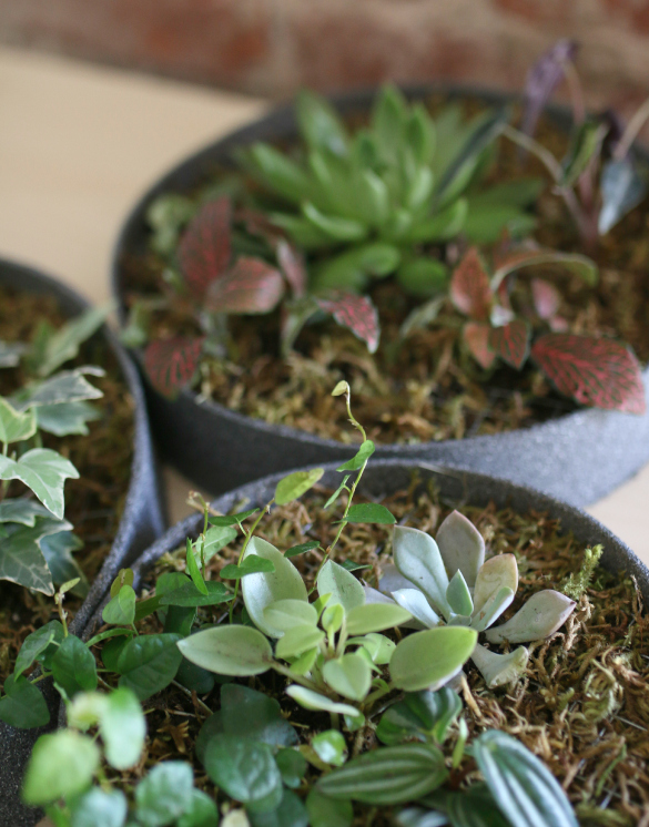 Под конец – после высадки всех растений – добавляем сверху слой цветочного мха