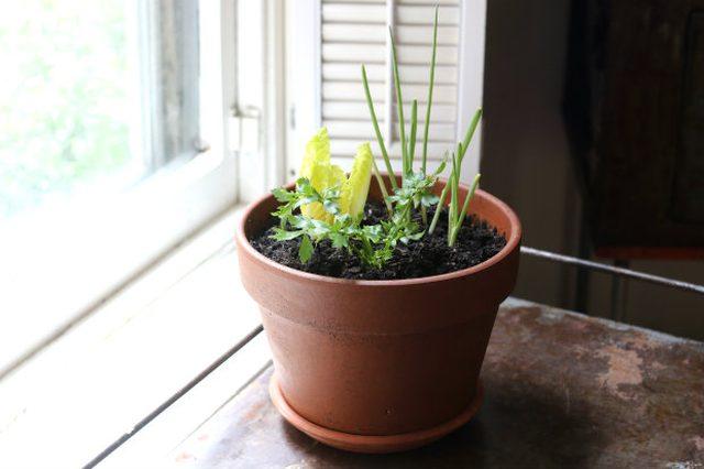 Как экономить, выращивая салаты и овощи из обрезков покупных салатов, овощей