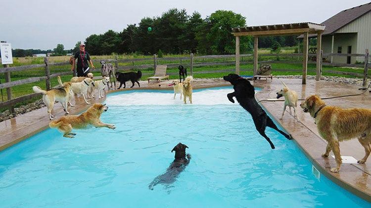 ... но потом животные освоились и стали прыгать в воду сами
