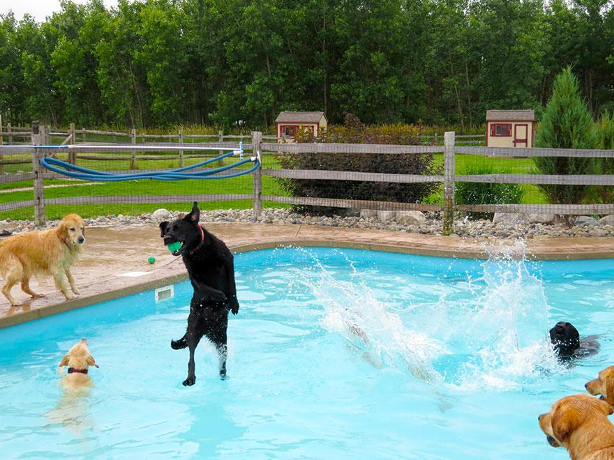 собачья вечеринка у бассейна