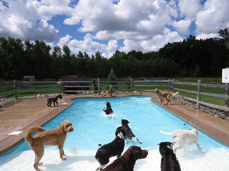 специальный пологий спуск в бассейне для собак