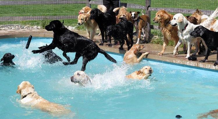 Как выглядит «вечеринка у бассейна» в собачьей гостинице (+ видео!)