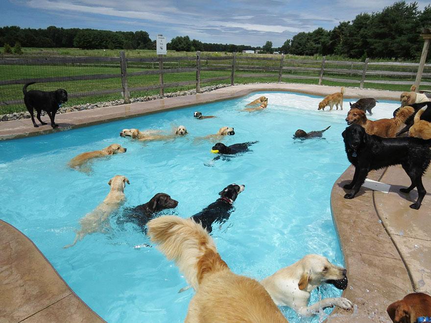 вечеринка в бассейне для собак