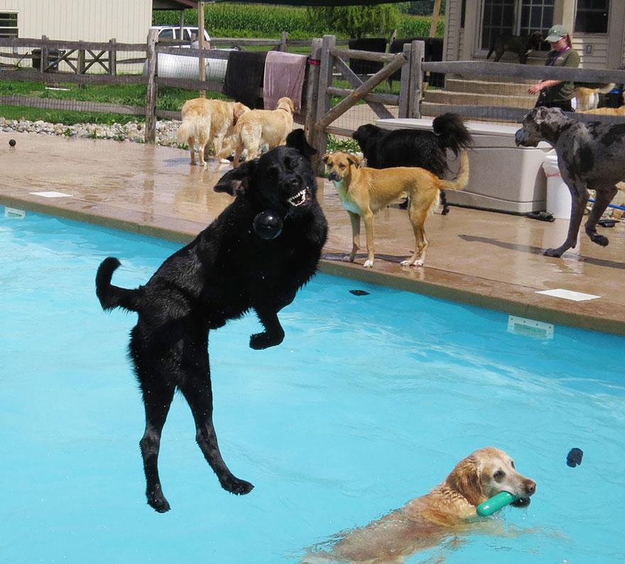 сначала собакам кидали мячики и другие игрушки, чтобы животные привыкли к воде....