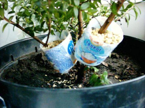 Как вырастить растения из листика или стебелька