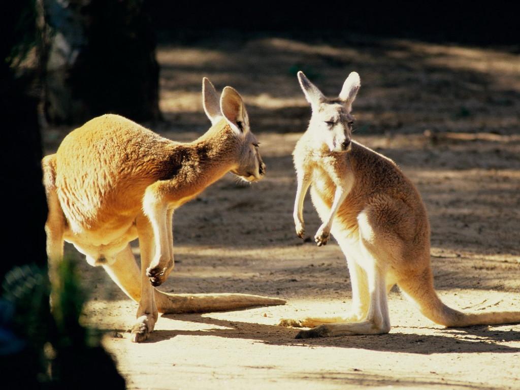 Как получить наилучшие впечатления от путешествия в Австралию?