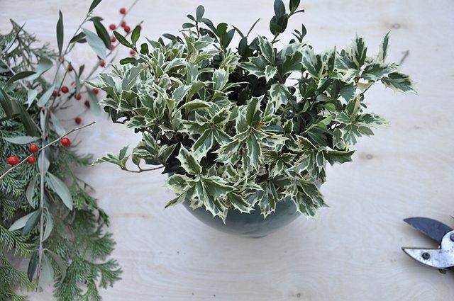 Добавляем второй слой вечнозеленых в вазу – других. Это должны быть более интересные веточки, как падуб с белой окантовкой.