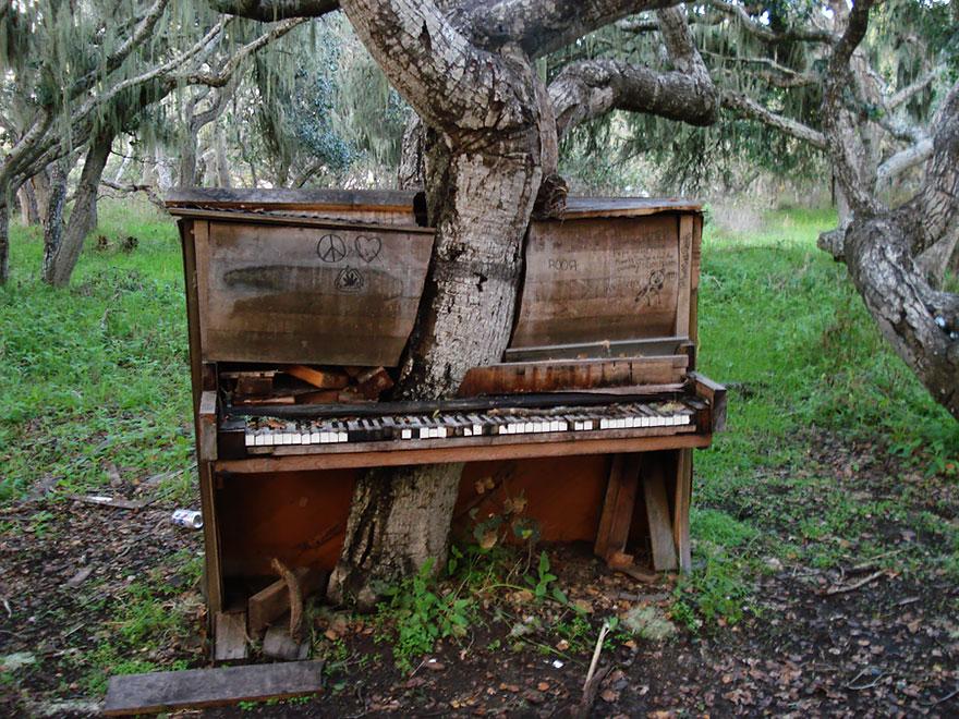 Дерево, проросшее сквозь пианино – Калифорния, США